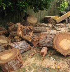 Stump Grinding Cost Stump Removal Cost Price Best Price Save Discount Atlanta Georgia Fulton, Forsyth, Gwinnet, Dekalb, Cobb, Cherokee counties